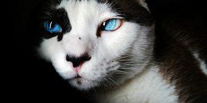 Les super-pouvoirs insoupçonnés du chat