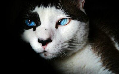 Les pouvoirs spirituels insoupçonnés du chat